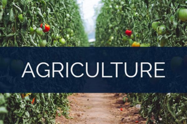 ECHELON LOCAL - ATLANTA GA | INTERNET MARKETING SERVICE | GROW YOUR BUSINESS | Agriculture-Industry
